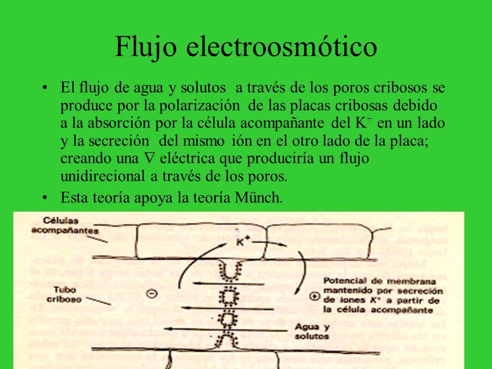 Flujo electroosmótico