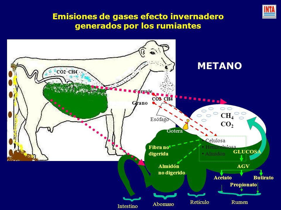 Emisiones de gases efecto invernadero generados por los rumiantes