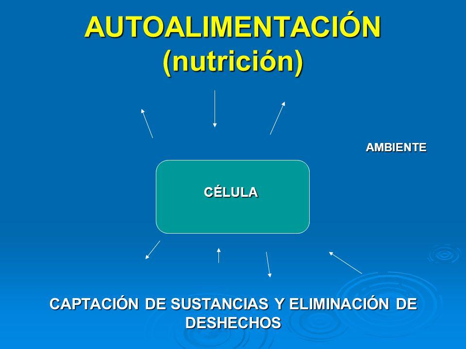 AUTOALIMENTACIÓN (nutrición)