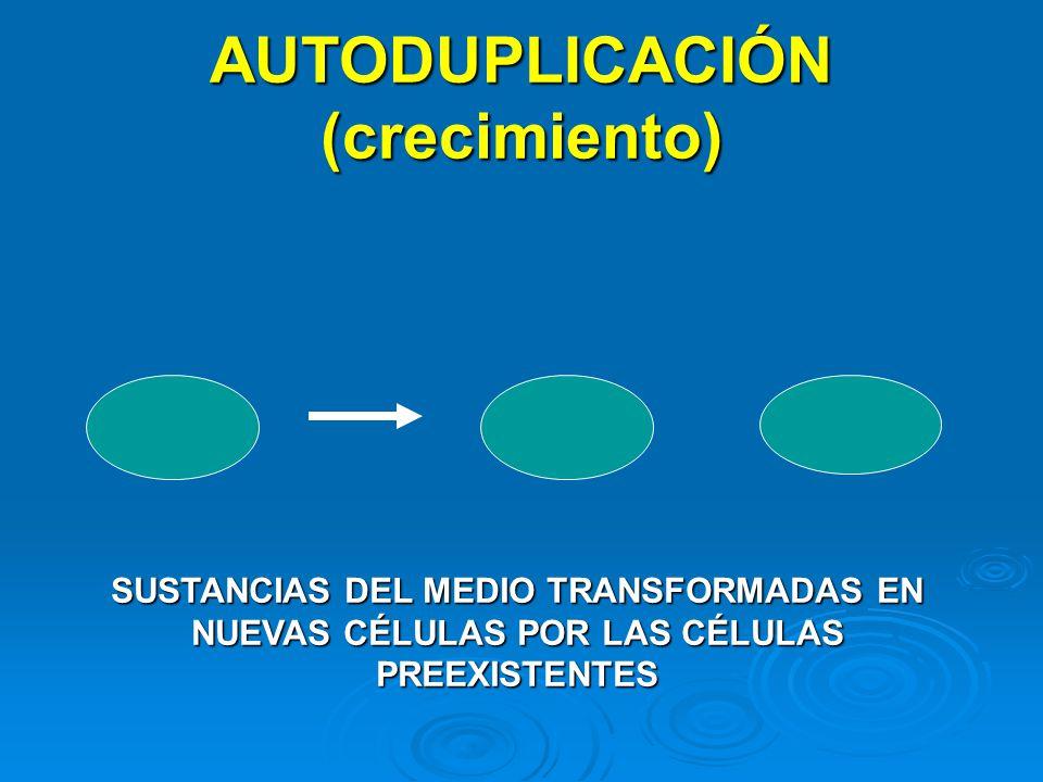 AUTODUPLICACIÓN (crecimiento)