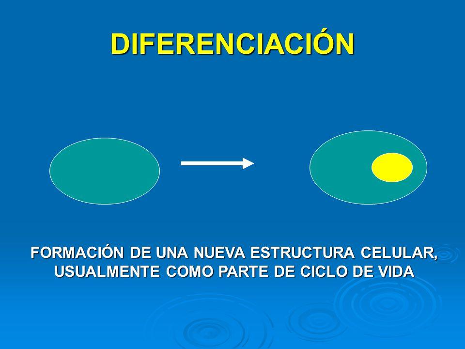 DIFERENCIACIÓN FORMACIÓN DE UNA NUEVA ESTRUCTURA CELULAR, USUALMENTE COMO PARTE DE CICLO DE VIDA