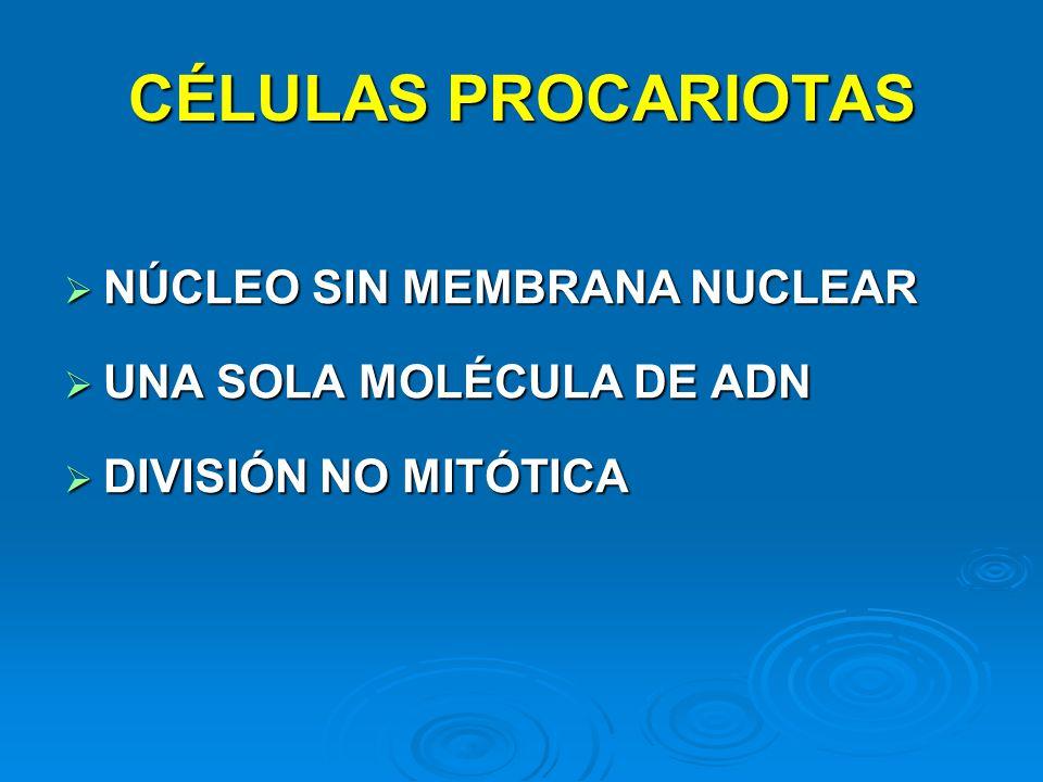 CÉLULAS PROCARIOTAS NÚCLEO SIN MEMBRANA NUCLEAR