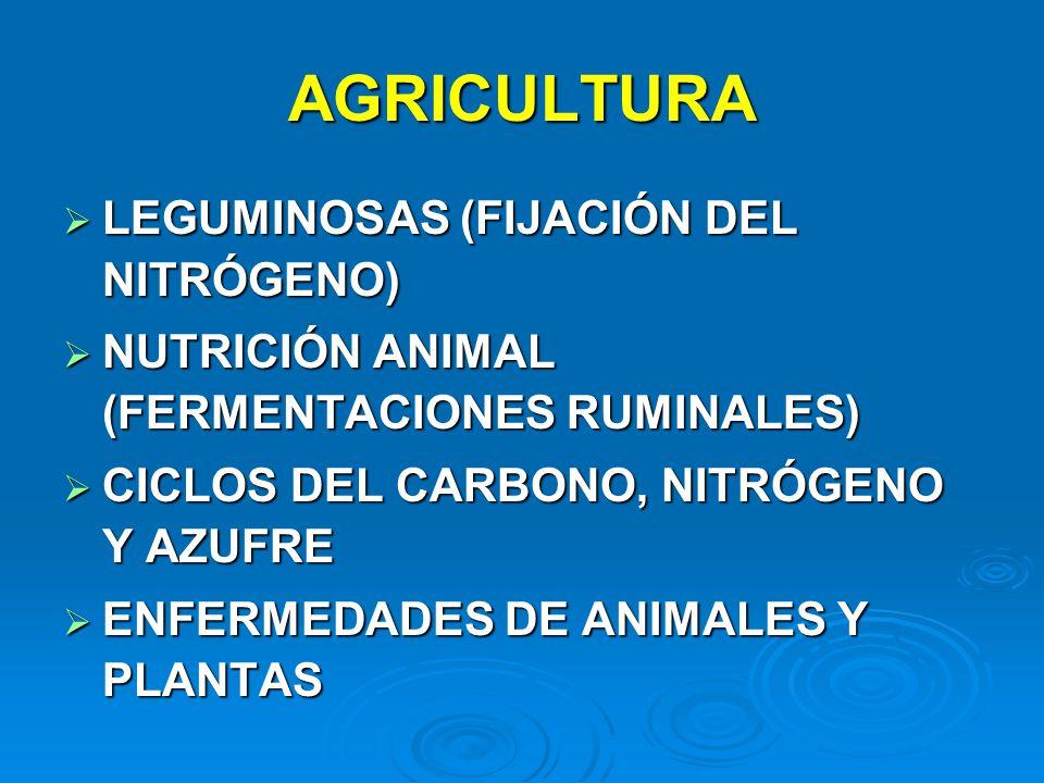 AGRICULTURA LEGUMINOSAS (FIJACIÓN DEL NITRÓGENO)