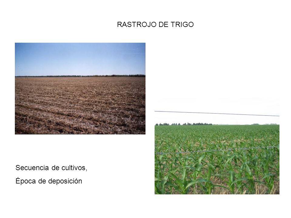 RASTROJO DE TRIGO Secuencia de cultivos, Época de deposición