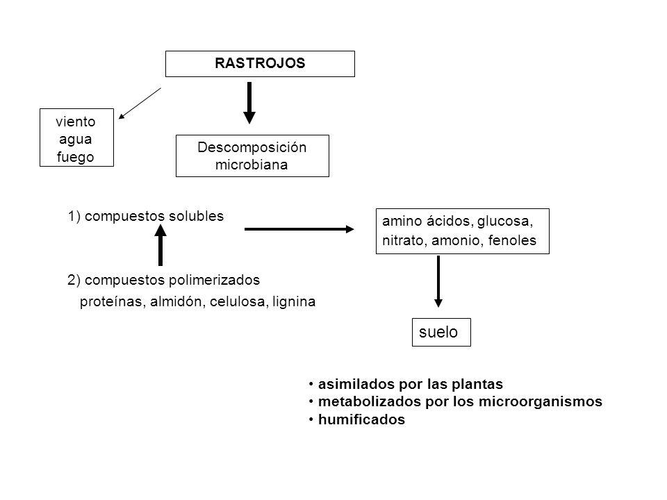 Descomposición microbiana