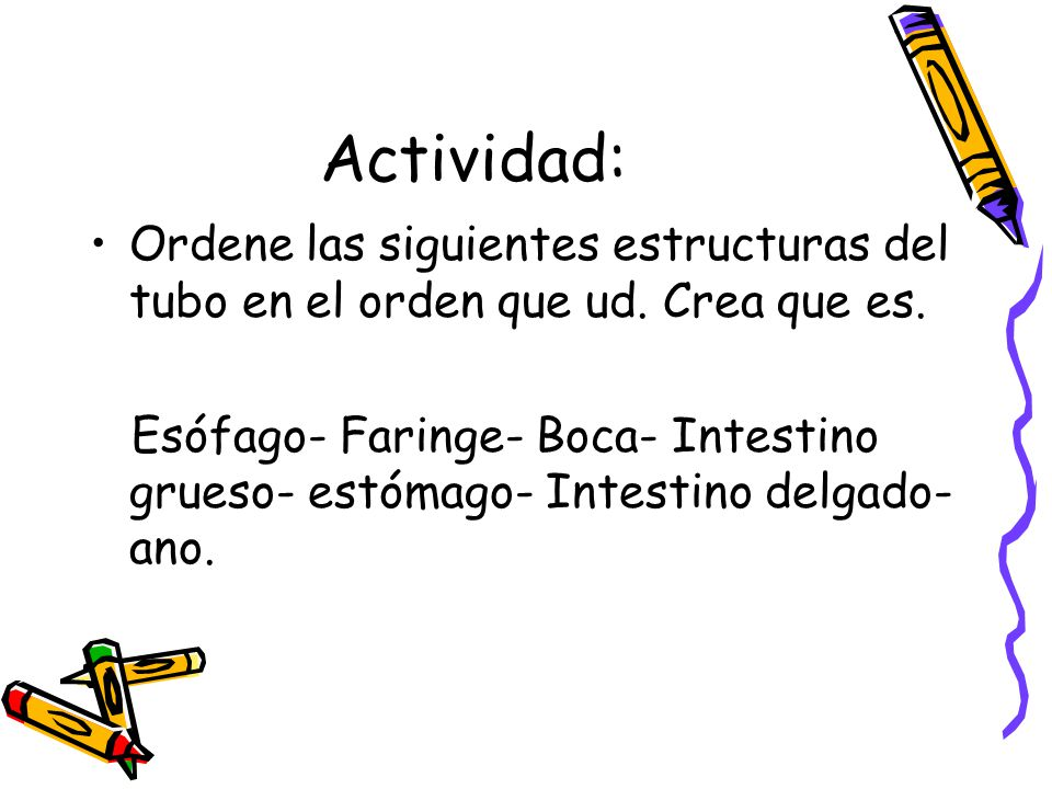 Actividad: Ordene las siguientes estructuras del tubo en el orden que ud. Crea que es.