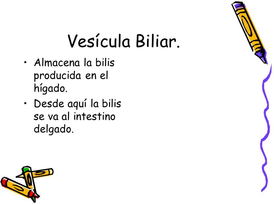 Vesícula Biliar. Almacena la bilis producida en el hígado.