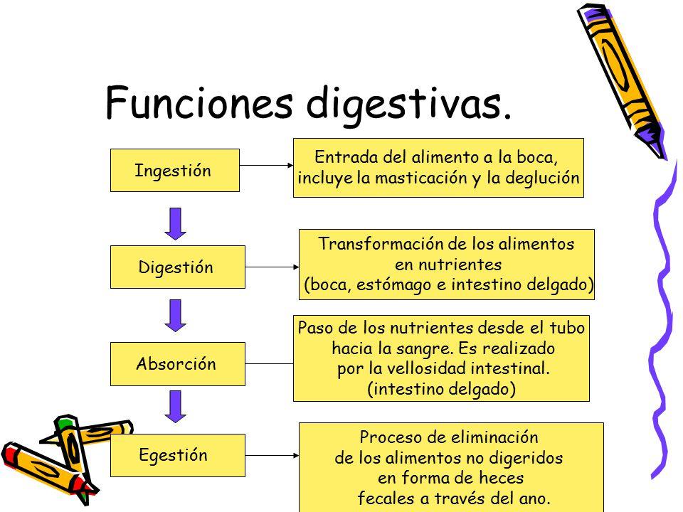 Funciones digestivas. Entrada del alimento a la boca,