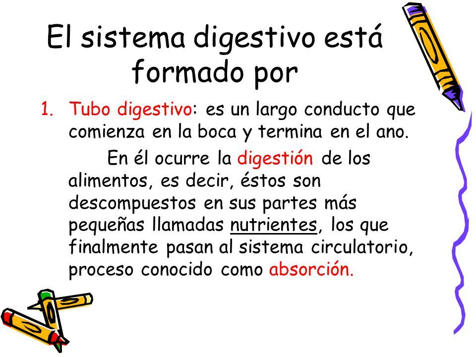 El sistema digestivo está formado por