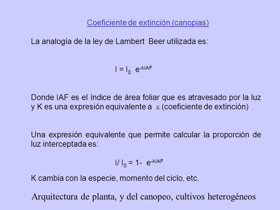 Arquitectura de planta, y del canopeo, cultivos heterogéneos