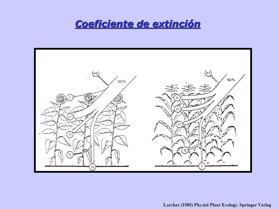 Coeficiente de extinción