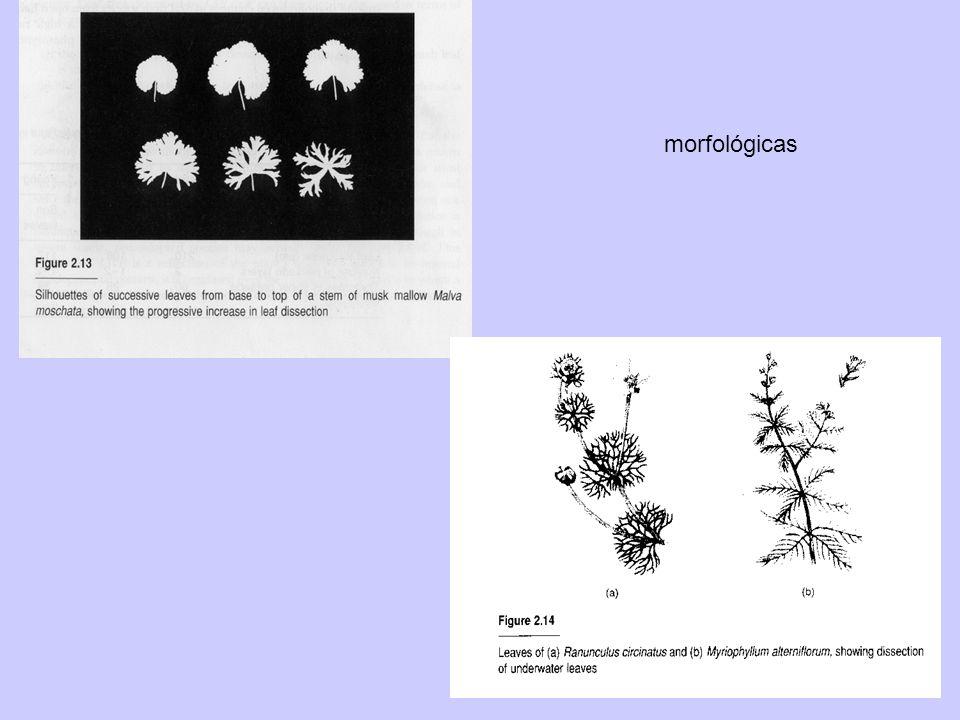 morfológicas
