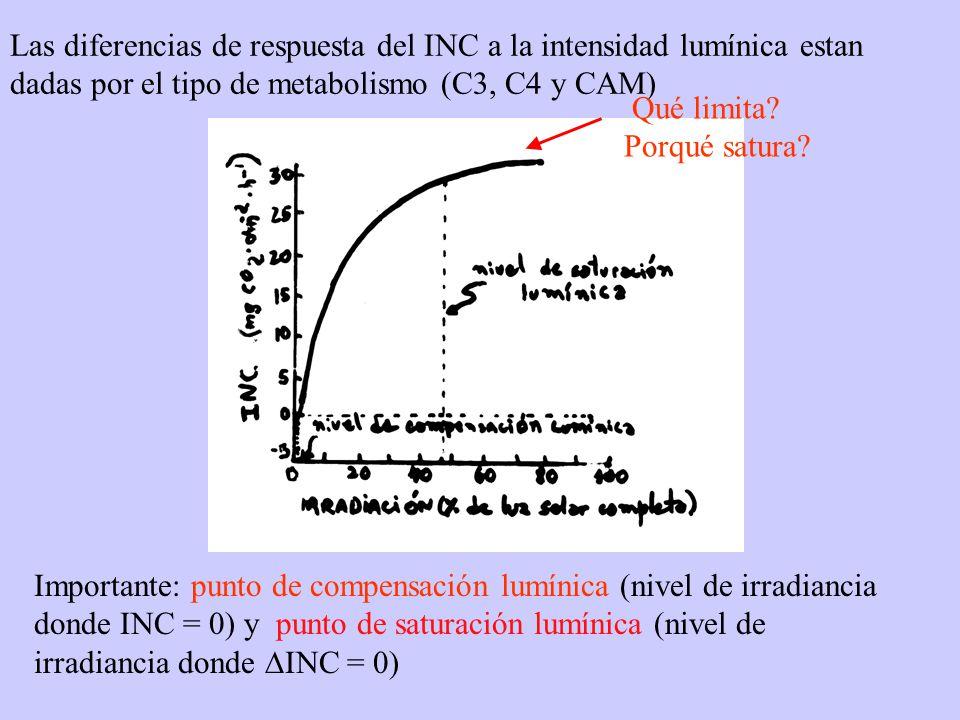 Las diferencias de respuesta del INC a la intensidad lumínica estan dadas por el tipo de metabolismo (C3, C4 y CAM)