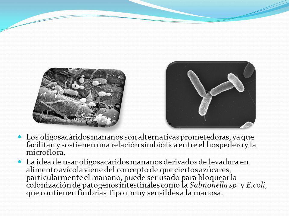 Los oligosacáridos mananos son alternativas prometedoras, ya que facilitan y sostienen una relación simbiótica entre el hospedero y la microflora.