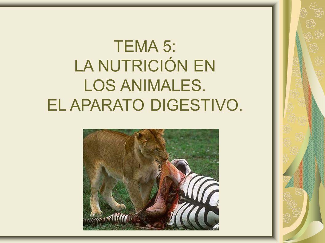 TEMA 5: LA NUTRICIÓN EN LOS ANIMALES. EL APARATO DIGESTIVO.