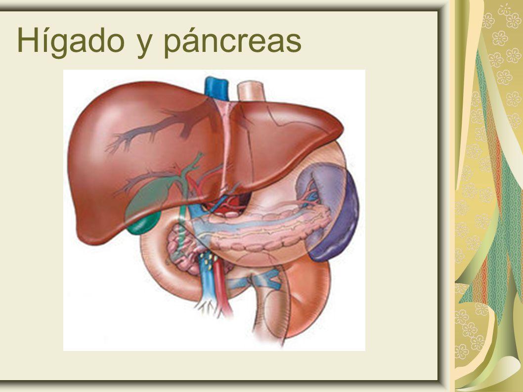 Hígado y páncreas 23