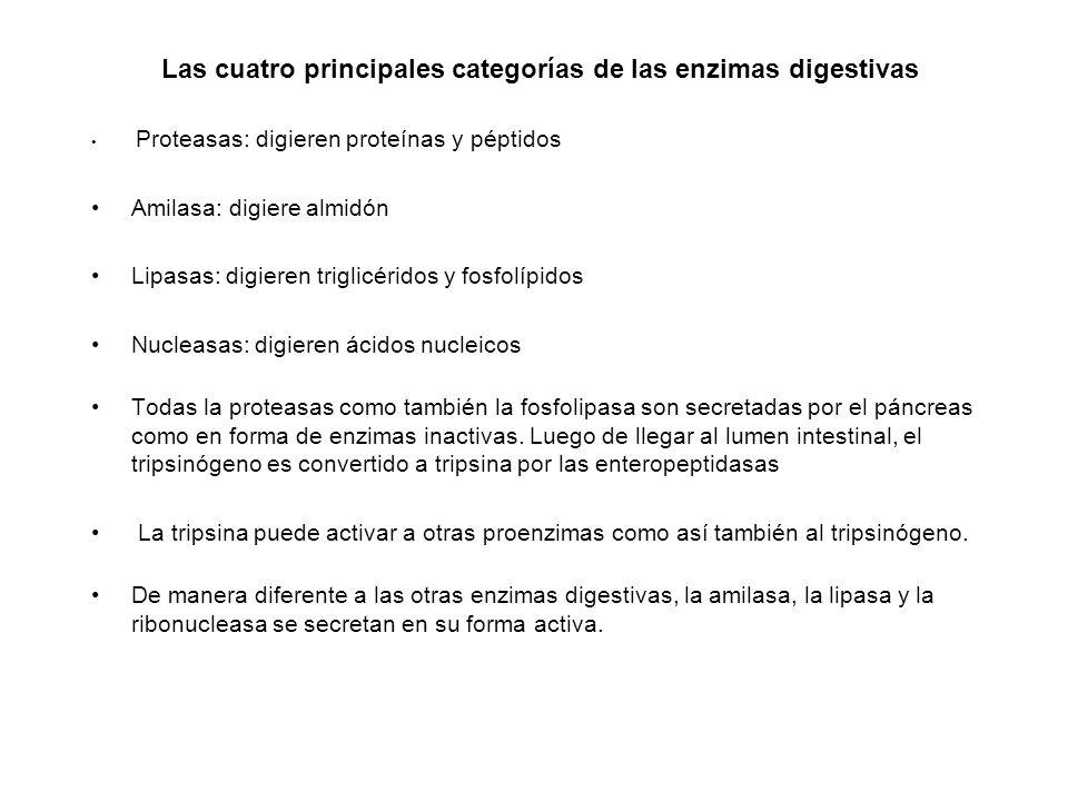 Las cuatro principales categorías de las enzimas digestivas