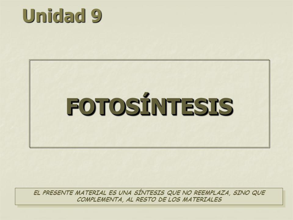 Unidad 9 FOTOSÍNTESIS.