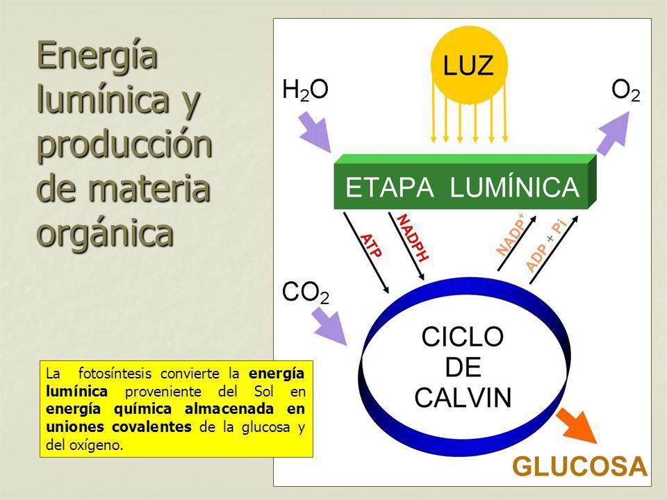 Energía lumínica y producción de materia orgánica