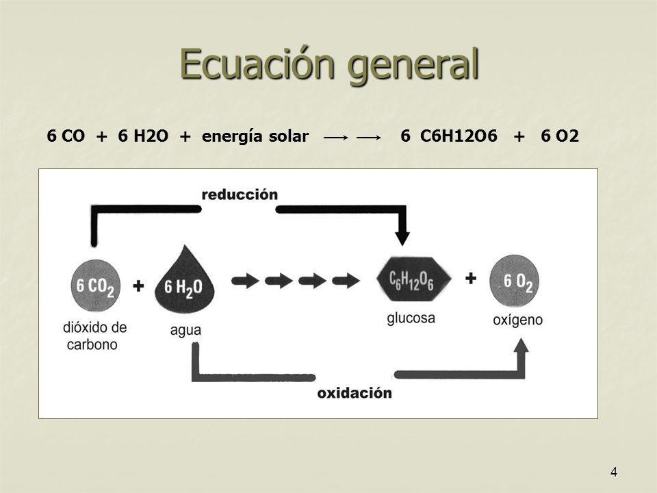 6 CO + 6 H2O + energía solar 6 C6H12O6 + 6 O2