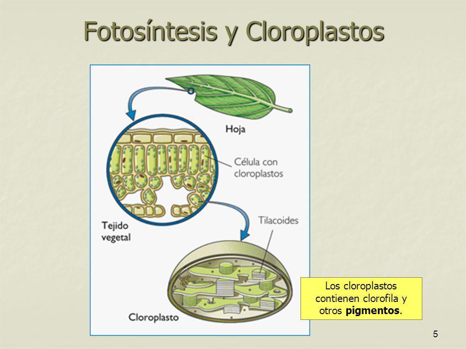 Fotosíntesis y Cloroplastos