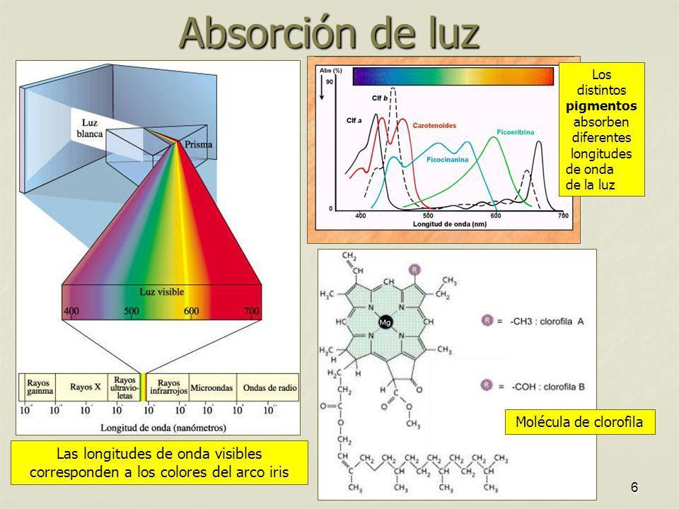 Los distintos pigmentos absorben diferentes longitudes