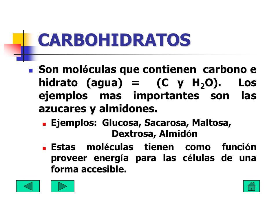 CARBOHIDRATOS Son moléculas que contienen carbono e hidrato (agua) = (C y H2O). Los ejemplos mas importantes son las azucares y almidones.