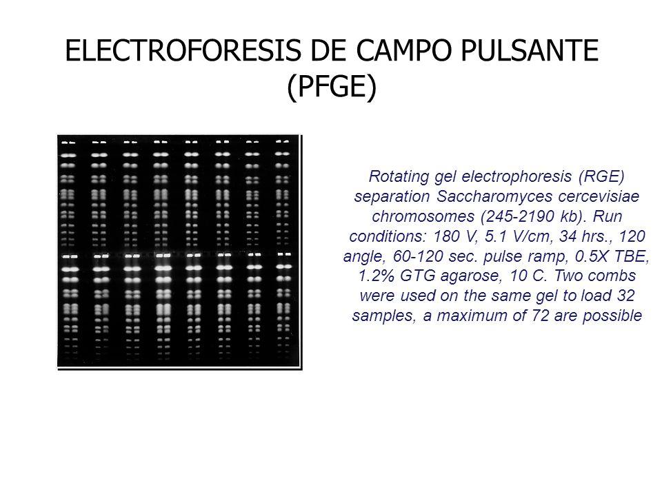 ELECTROFORESIS DE CAMPO PULSANTE (PFGE)