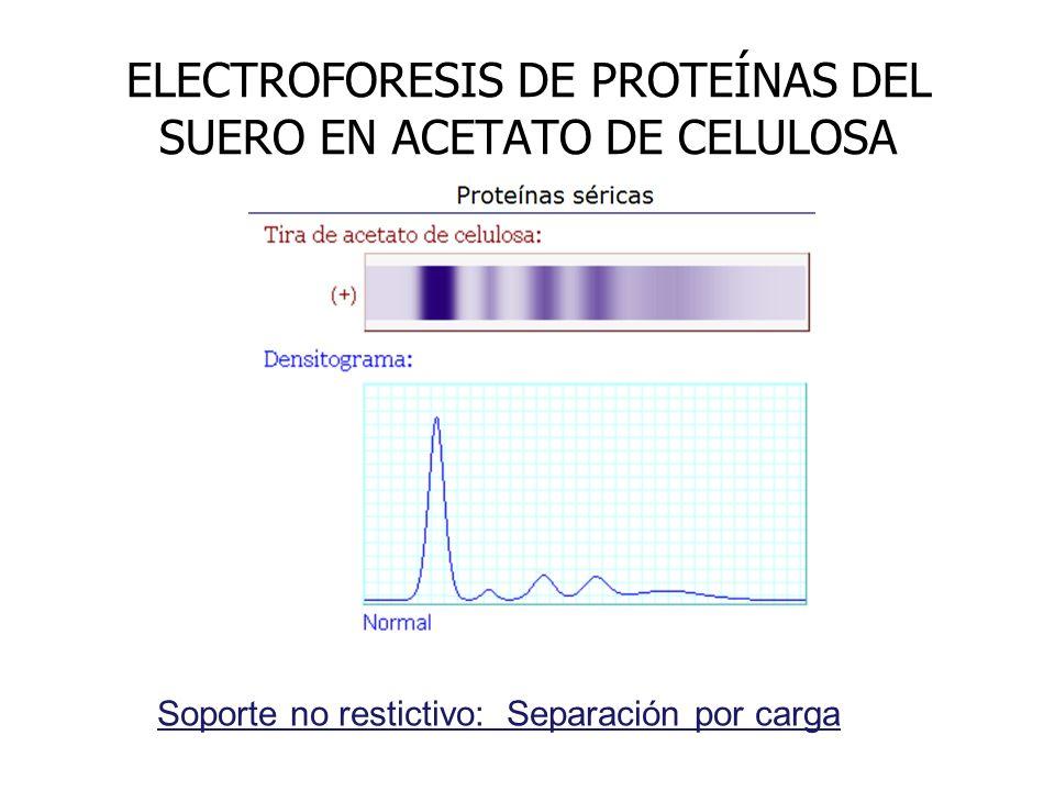 ELECTROFORESIS DE PROTEÍNAS DEL SUERO EN ACETATO DE CELULOSA