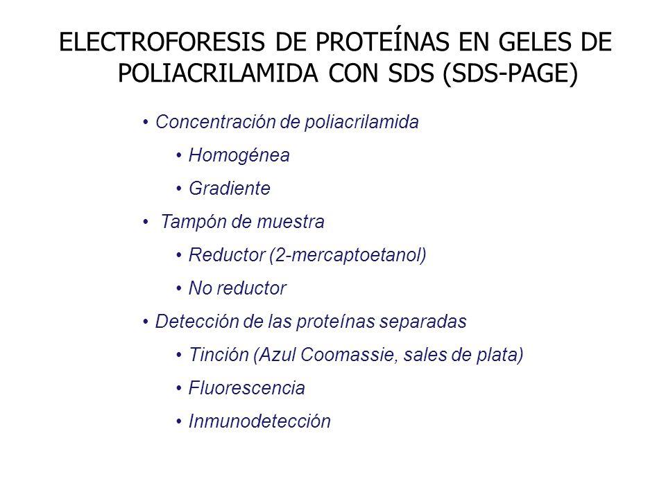ELECTROFORESIS DE PROTEÍNAS EN GELES DE POLIACRILAMIDA CON SDS (SDS-PAGE)