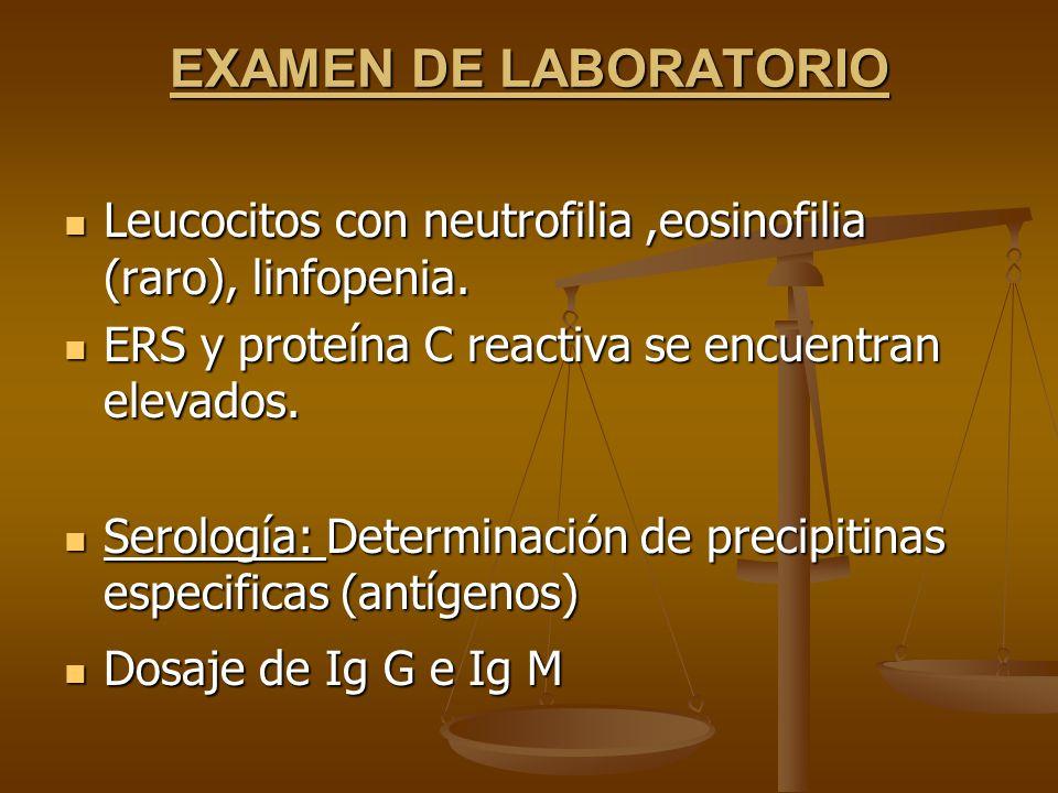 EXAMEN DE LABORATORIO Leucocitos con neutrofilia ,eosinofilia (raro), linfopenia. ERS y proteína C reactiva se encuentran elevados.