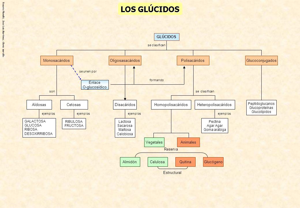LOS GLÚCIDOS Aldosas GLÚCIDOS Monosacáridos Glucoconjugados