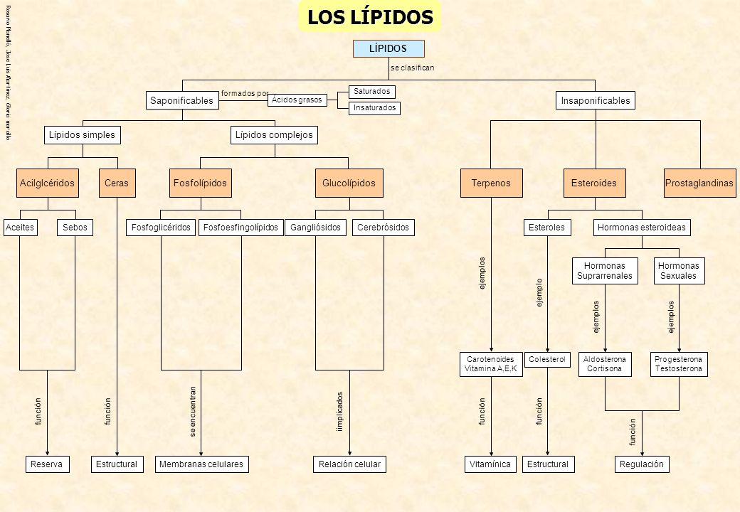 LOS LÍPIDOS Insaponificables Saponificables Lípidos complejos