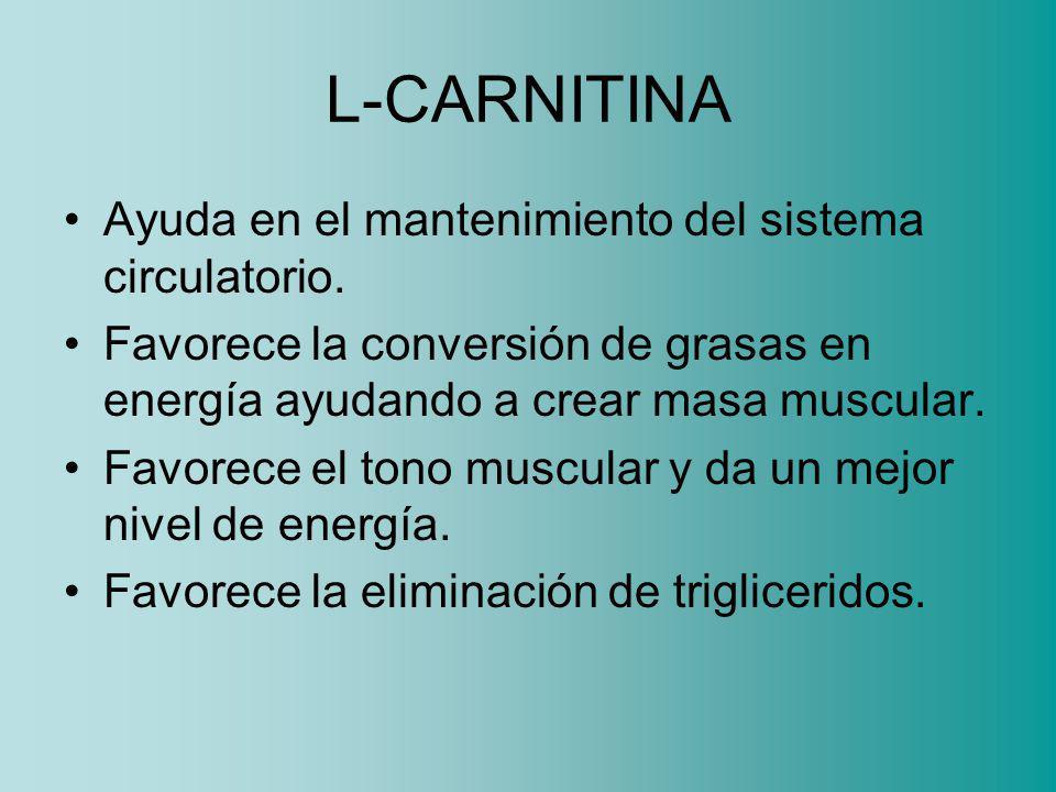 L-CARNITINA Ayuda en el mantenimiento del sistema circulatorio.
