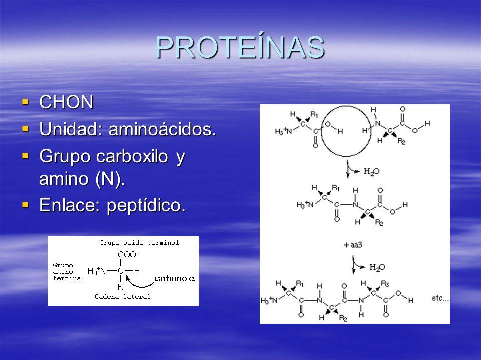 PROTEÍNAS CHON Unidad: aminoácidos. Grupo carboxilo y amino (N).