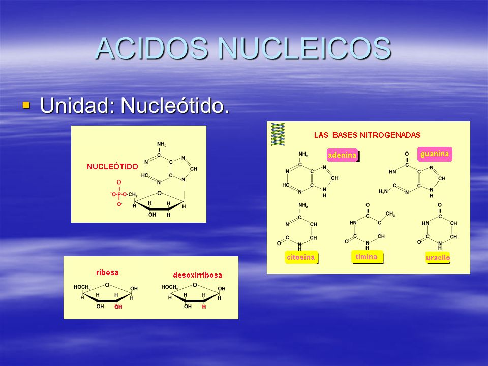 ACIDOS NUCLEICOS Unidad: Nucleótido.