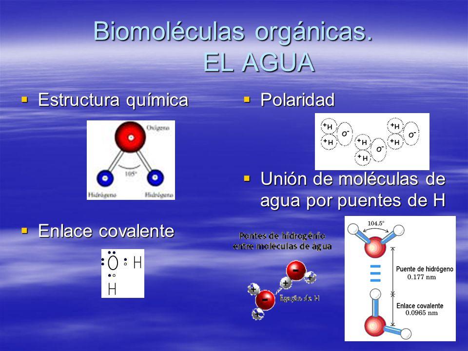 Biomoléculas orgánicas. EL AGUA