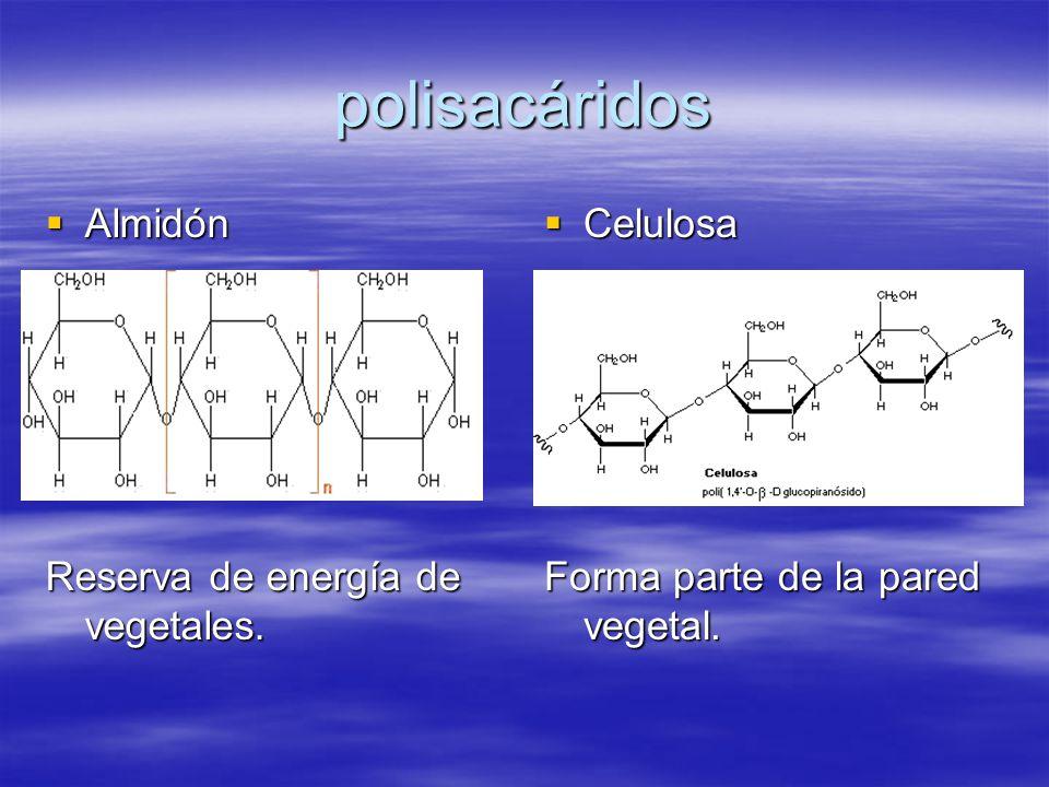 polisacáridos Almidón Reserva de energía de vegetales. Celulosa