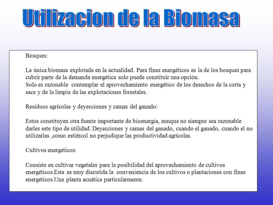 Utilizacion de la Biomasa