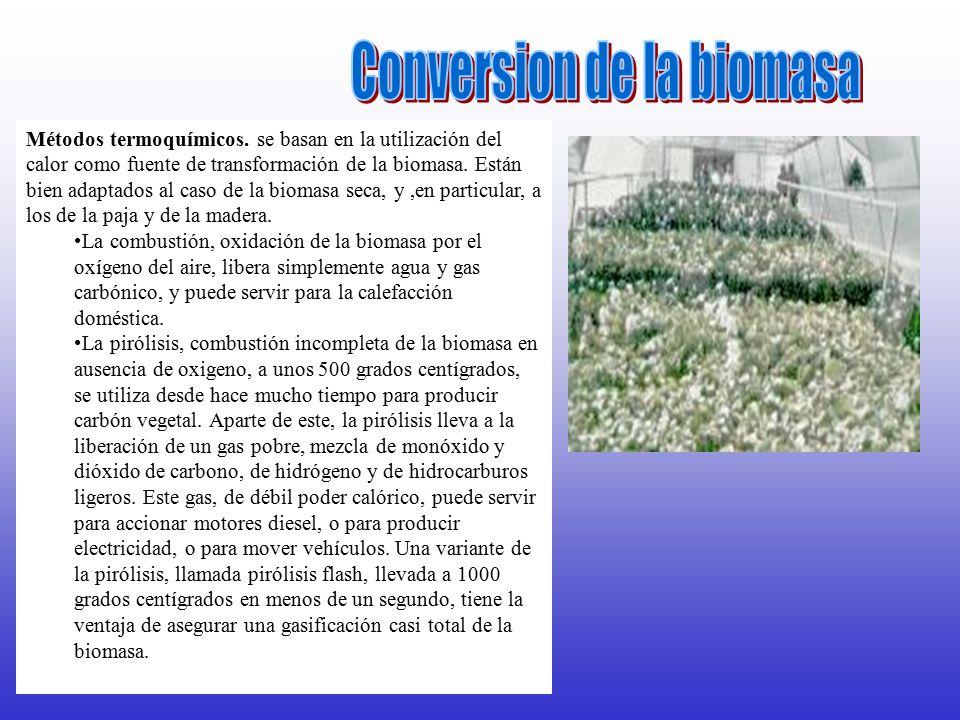 Conversion de la biomasa