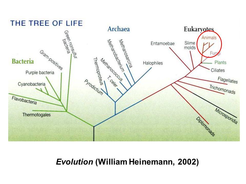 Evolution (William Heinemann, 2002)