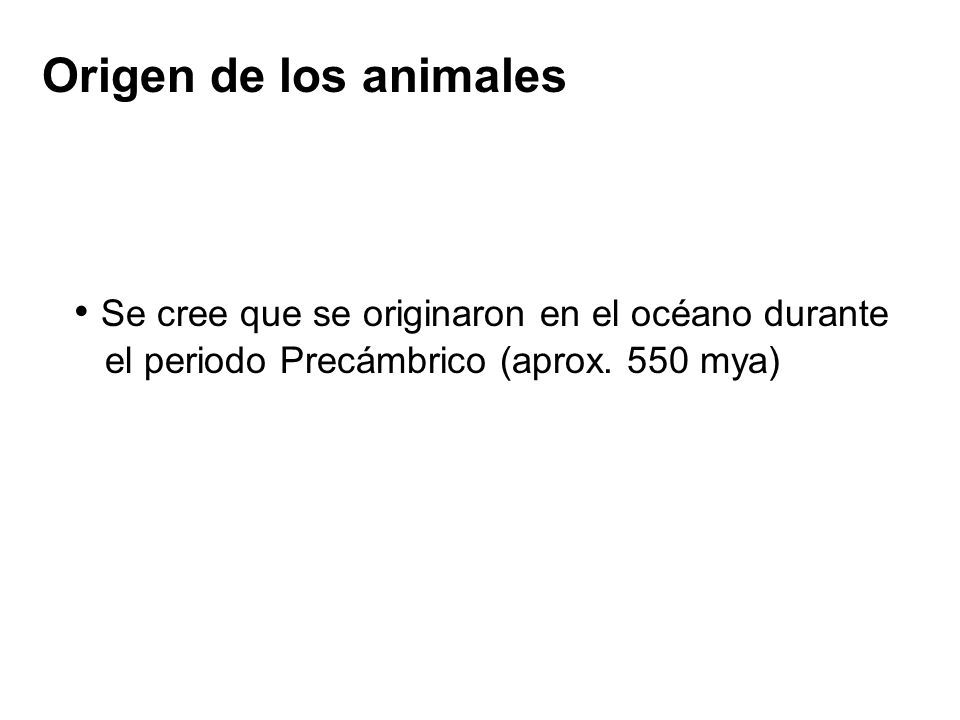 Origen de los animales Se cree que se originaron en el océano durante