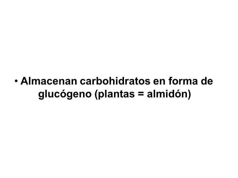 Almacenan carbohidratos en forma de glucógeno (plantas = almidón)