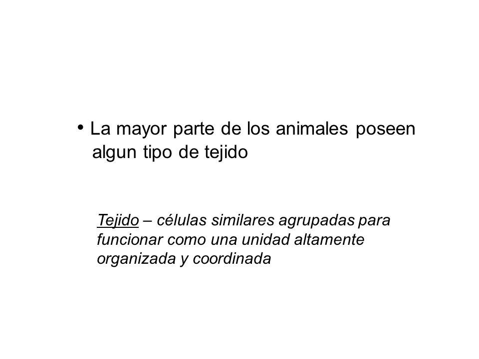 La mayor parte de los animales poseen