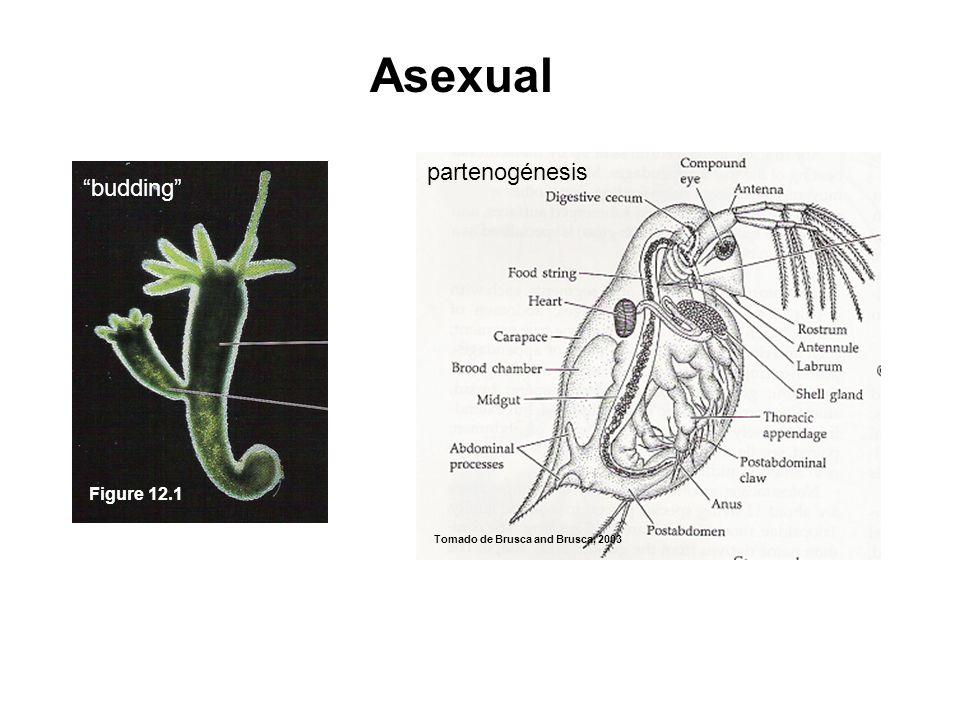 Asexual Hydra Daphnia Figure 12.1 partenogénesis budding