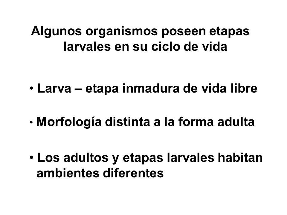 Algunos organismos poseen etapas larvales en su ciclo de vida
