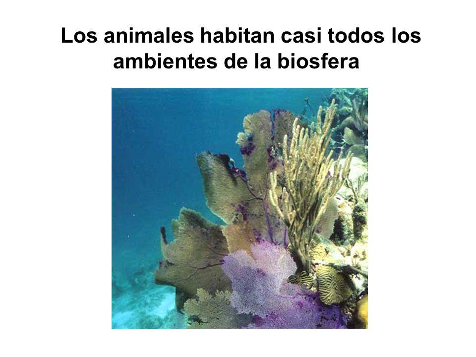 Los animales habitan casi todos los ambientes de la biosfera