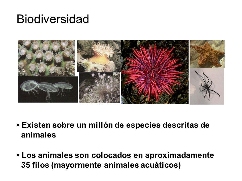 Biodiversidad Existen sobre un millón de especies descritas de