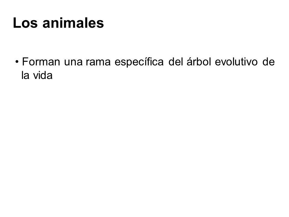 Los animales Forman una rama específica del árbol evolutivo de la vida