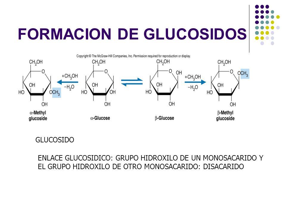FORMACION DE GLUCOSIDOS